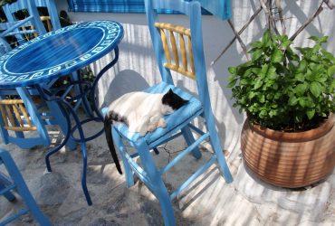 Mi sono chiesta a cosa servissero tutti 'sti gatti in Grecia e ho scoperto che…