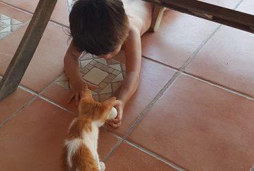 La Mia Famiglia e Altri Animali – My Greek Salad Edition