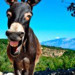 Quando rientrare dalla Grecia significa avere bisogno di Rehab!